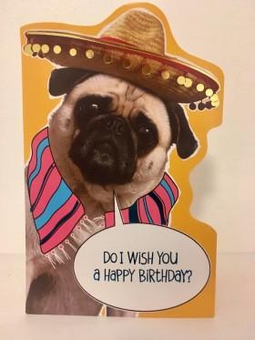 Mexican Pug Birthday Card