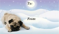 To & From Pug Christmas Labels Pack Of Ten