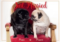 Cute Pug Wedding Postcard