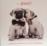 Cute Pug Puppy Birthday Card