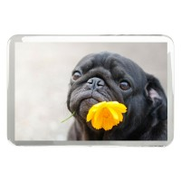 Black Pug Fridge Magnet