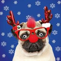 Cute Fluff Pug Christmas Card