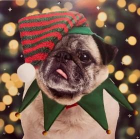 Cute Pug Elf Christmas Card
