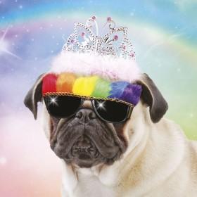 3D Pug Birthday Card