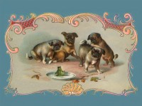 Lovely Vintage Pug Puppies Blank Card