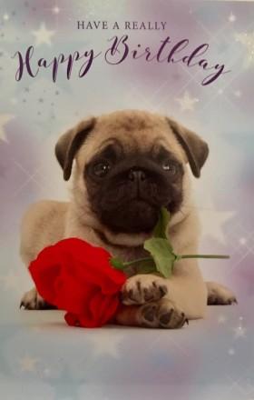 Sweet Pug Puppy Birthday Card