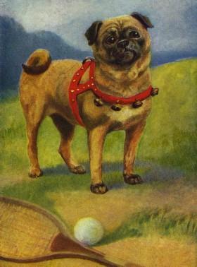 Lovely Vintage Pug Blank Card