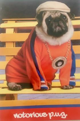 Funny Gangster Pug Birthday Card
