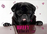 Black pug Happy Birthday Postcard