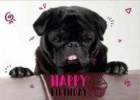 Black pug Happy Birthday Postcard