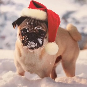 Cute Snow Pug Christmas Card