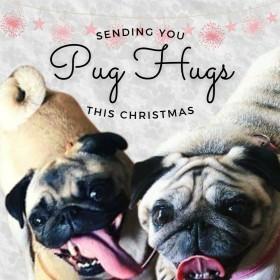 Cute  Pugs Christmas Card
