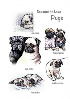 Funny Pugs Blank Pug Card