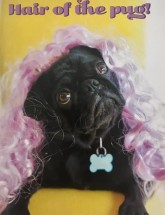 Funny Black Pug Birthday Card